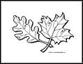 Leaves